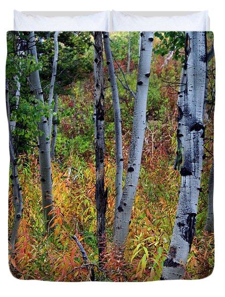 Aspen In Fall Duvet Cover by Marty Koch