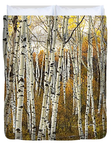 Aspen Tree Grove Duvet Cover by Ron Dahlquist - Printscapes