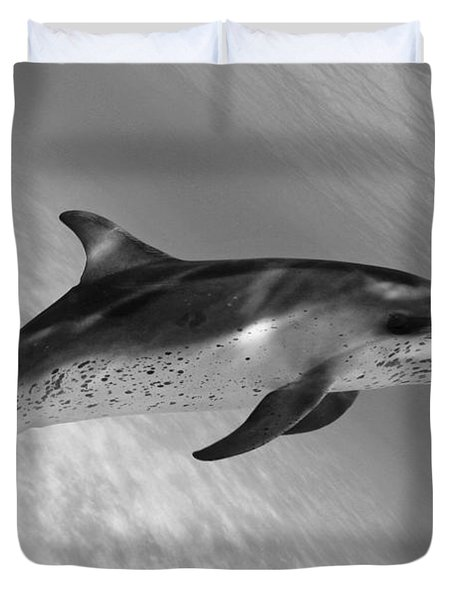 Atlantic Spotted Dolphin Duvet Cover by Dave Fleetham - Printscapes