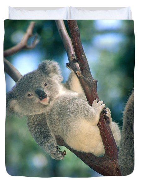 Baby Koala Bear Duvet Cover by Himani - Printscapes