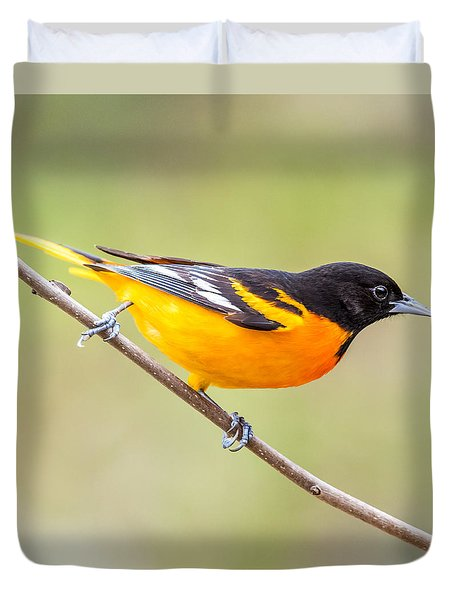 Baltimore Oriole Duvet Cover by Paul Freidlund
