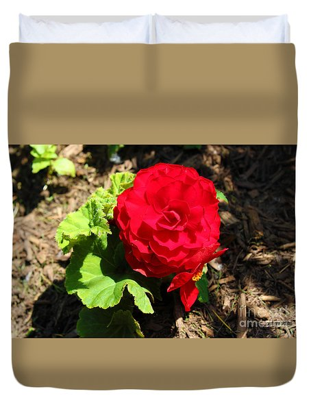 Begonia Flower - Red Duvet Cover by Corey Ford