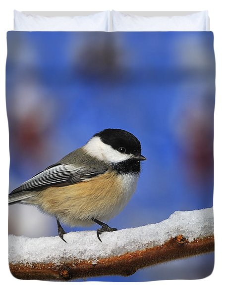 Black-capped Chickadee In Sumac Duvet Cover by Tony Beck