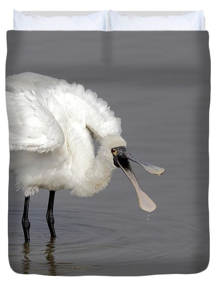 Black-faced Spoonbill Duvet Cover by Martin Hale/FLPA