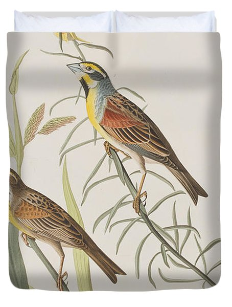 Black-throated Bunting Duvet Cover by John James Audubon