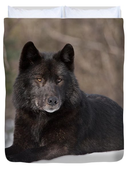 Black Wolf Duvet Cover by John Hyde - Printscapes