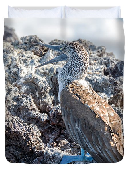 Blue Footed Booby Duvet Cover by Jess Kraft
