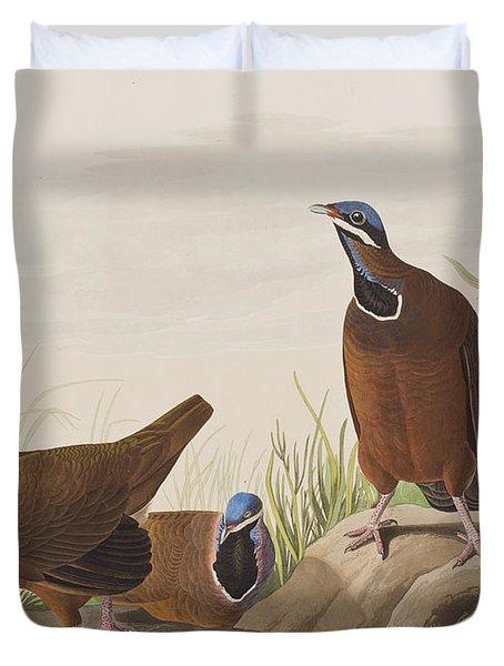 Blue Headed Pigeon Duvet Cover by John James Audubon