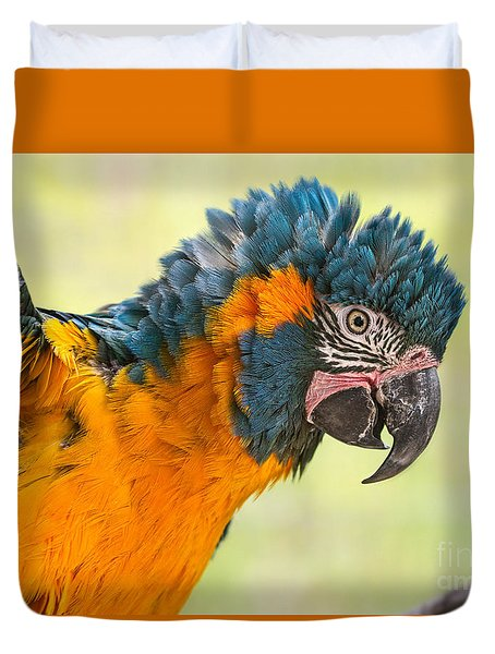 Blue Throated Macaw Duvet Cover by Jamie Pham