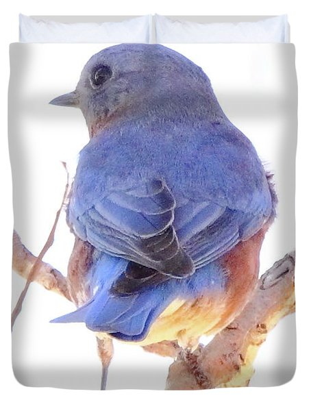 Bluebird On White Duvet Cover by Robert Frederick
