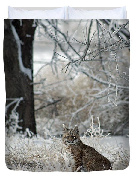 Bobcat and Heavy Frost Duvet Cover by Gary Langley