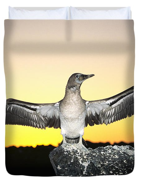 Booby At Sunset Duvet Cover by Dave Fleetham - Printscapes