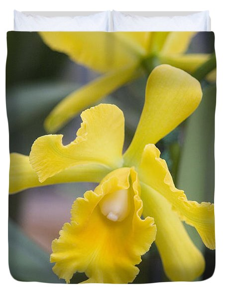Bright Yellow Cattleya Orchid Duvet Cover by Allan Seiden - Printscapes