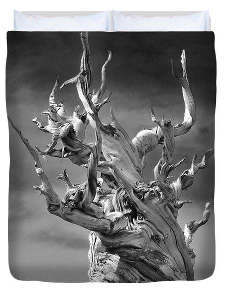 Bristlecone Pine - A Survival Expert Duvet Cover by Christine Till