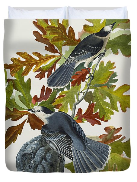 Canada Jay Duvet Cover by John James Audubon
