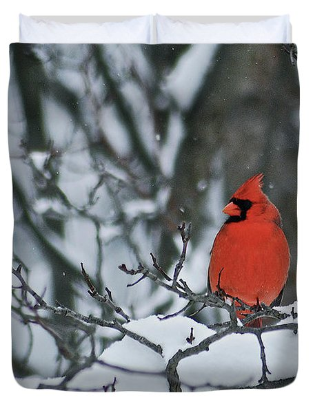 Cardinal and snow Duvet Cover by Michael Peychich