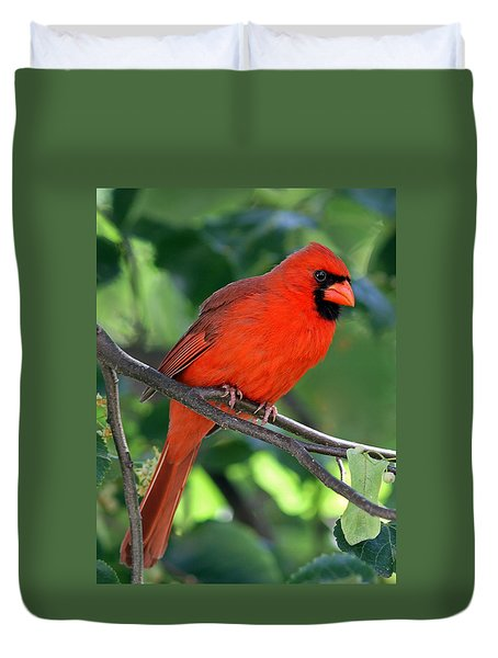 Cardinal Duvet Cover by Juergen Roth