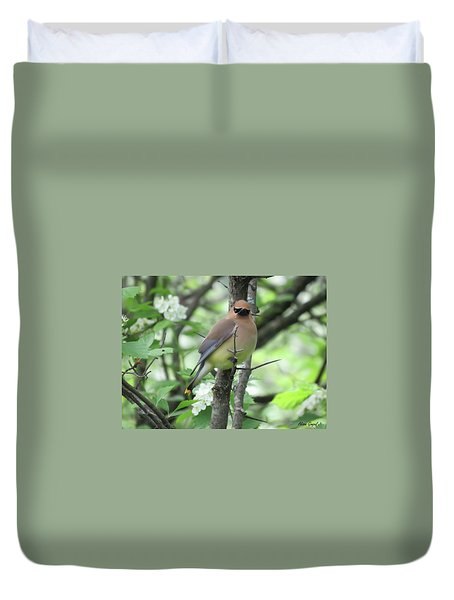 Cedar Wax Wing Duvet Cover by Alison Gimpel