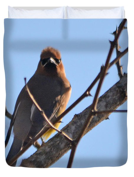 Cedar Wax Wing On The Lookout Duvet Cover by Barbara Dalton