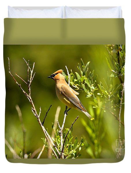 Cedar Waxwing At Glacier Duvet Cover by Adam Jewell
