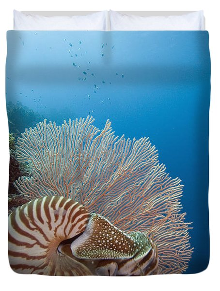 Chambered Nautilus Duvet Cover by Dave Fleetham - Printscapes