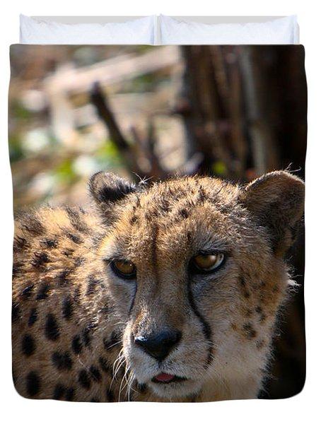Cheetah Gazing Duvet Cover by Douglas Barnett