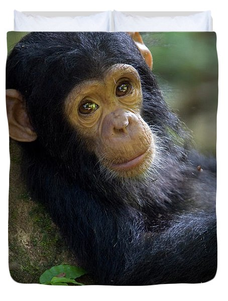 Chimpanzee Pan Troglodytes Baby Leaning Duvet Cover by Ingo Arndt