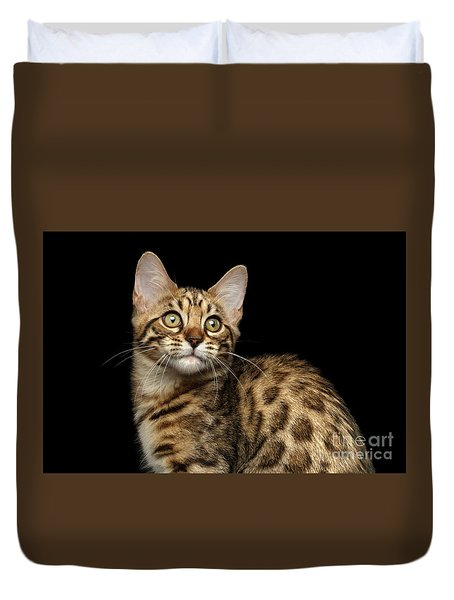 Closeup Bengal Kitty On Isolated Black Background Duvet Cover by Sergey Taran