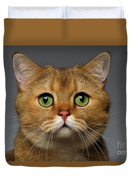 Closeup Golden British Cat With  Green Eyes On Gray Duvet Cover by Sergey Taran