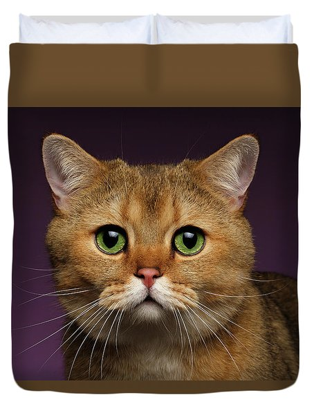 Closeup Golden British Cat With  Green Eyes On Purple  Duvet Cover by Sergey Taran