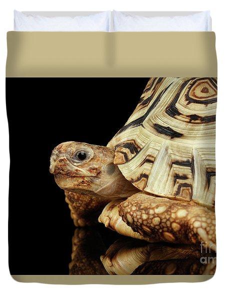 Closeup Leopard Tortoise Albino,stigmochelys Pardalis Turtle With White Shell On Isolated Black Back Duvet Cover by Sergey Taran