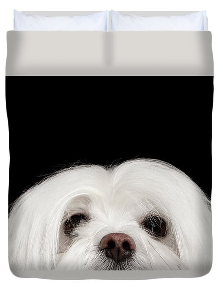 Closeup Nosey White Maltese Dog Looking In Camera Isolated On Black Background Duvet Cover by Sergey Taran