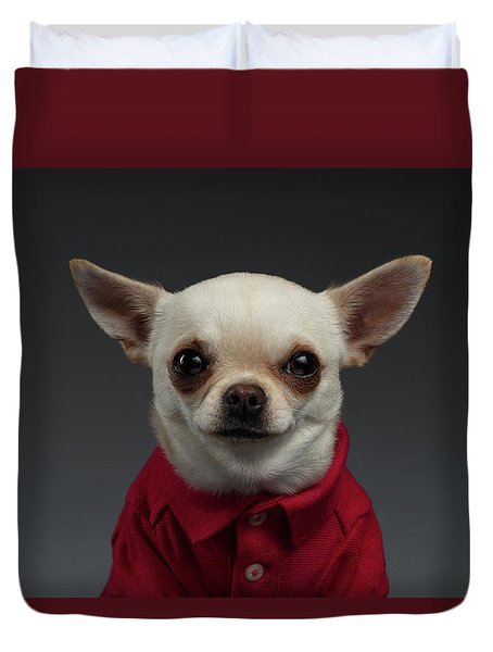 Closeup Portrait Chihuahua Dog In Stylish Clothes. Gray Background Duvet Cover by Sergey Taran