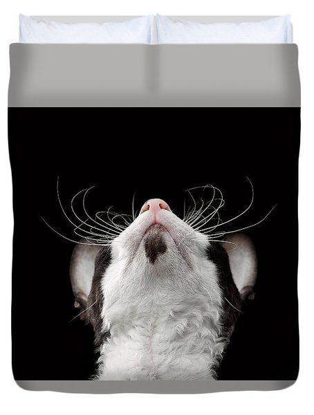 Closeup Portrait Of Cornish Rex Looking Up Isolated On Black  Duvet Cover by Sergey Taran