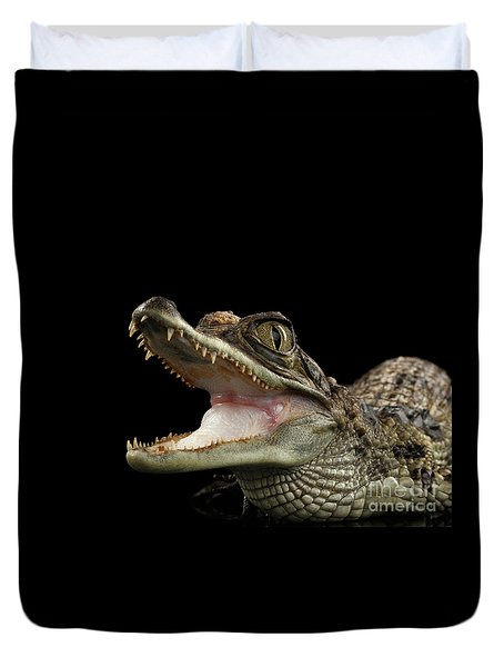Closeup Young Cayman Crocodile, Reptile With Opened Mouth Isolated On Black Background Duvet Cover by Sergey Taran