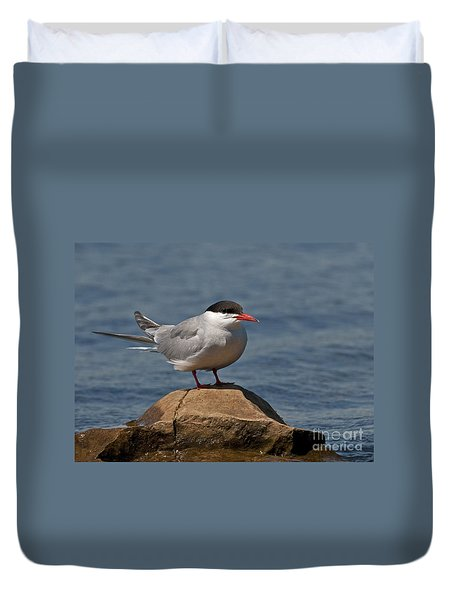 Common Tern... Duvet Cover by Nina Stavlund