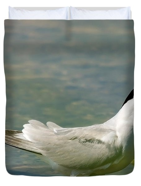 Common Tern Portrait Duvet Cover by Cliff  Norton
