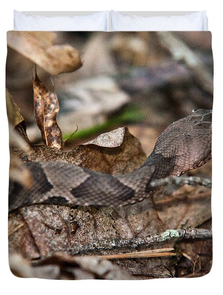 Copperhead 4 Duvet Cover by Douglas Barnett