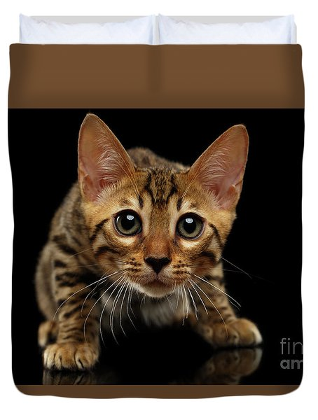 Crouching Bengal Kitty On Black  Duvet Cover by Sergey Taran