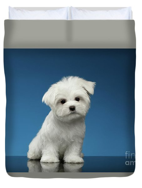 Cute Pure White Maltese Puppy Standing And Curiously Looking In Camera Isolated On Blue Background Duvet Cover by Sergey Taran