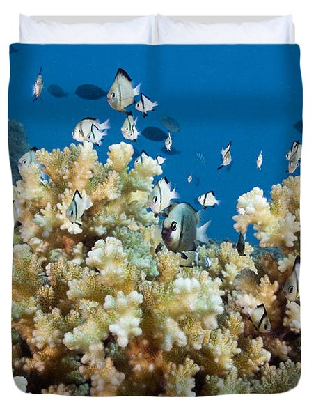 Damselfish Among Coral Duvet Cover by Dave Fleetham - Printscapes