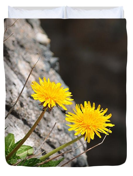 Dandelion Duvet Cover by Catherine Reusch  Daley