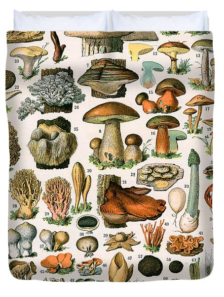 Decorative Print Of Champignons By Demoulin Duvet Cover by American School