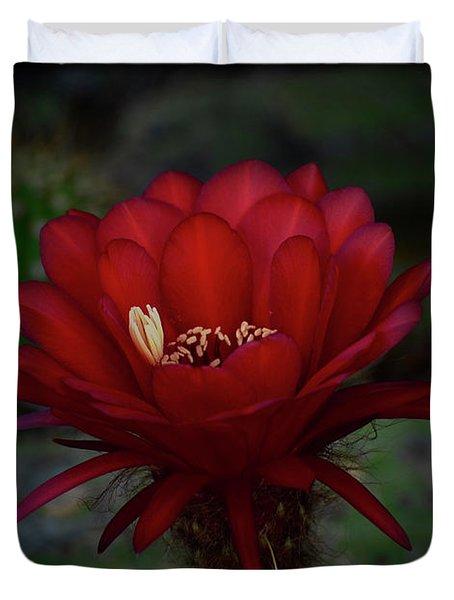Deep Red Duvet Cover by Saija  Lehtonen