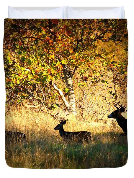 Deer Family in Sycamore Park Duvet Cover by Carol Groenen