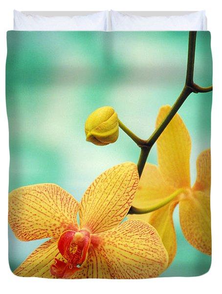 Dendrobium Duvet Cover by Allan Seiden - Printscapes