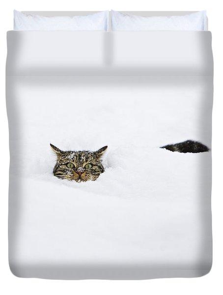 Domestic Cat Felis Catus In Deep Snow Duvet Cover by Konrad Wothe