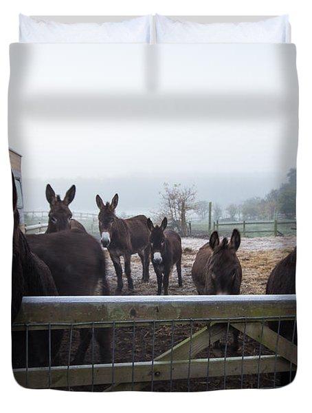 Donkeys Duvet Cover by Dawn OConnor