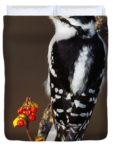 Downy Woodpecker On Tree Branch Duvet Cover by Panoramic Images