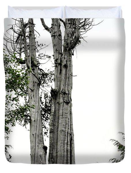 Duncan Memorial Big Cedar Tree - Olympic National Park WA Duvet Cover by Christine Till